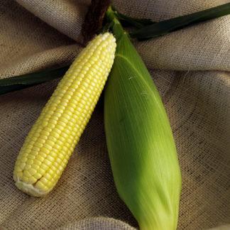 Американская сахарная кукуруза
